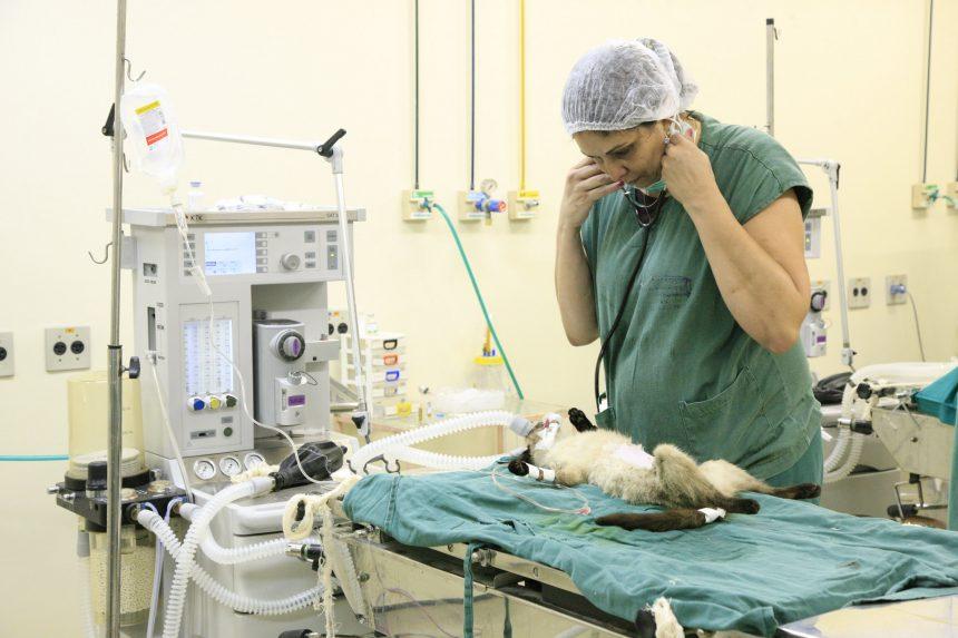 Inscrição para processo seletivo de veterinários vai até dia 23 de maio