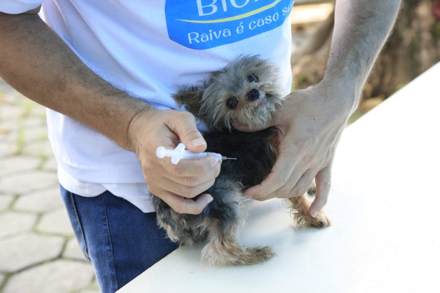 Cão é vacinado contra a raiva. Foto: divulgação / Prefeitura do Rio