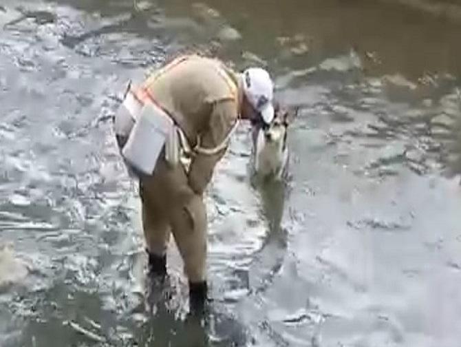 O guarda municipal se aproxima do cão que caiu dentro do Rio Maracanã para fazer p resgate. Foto: reprodução de vídeo