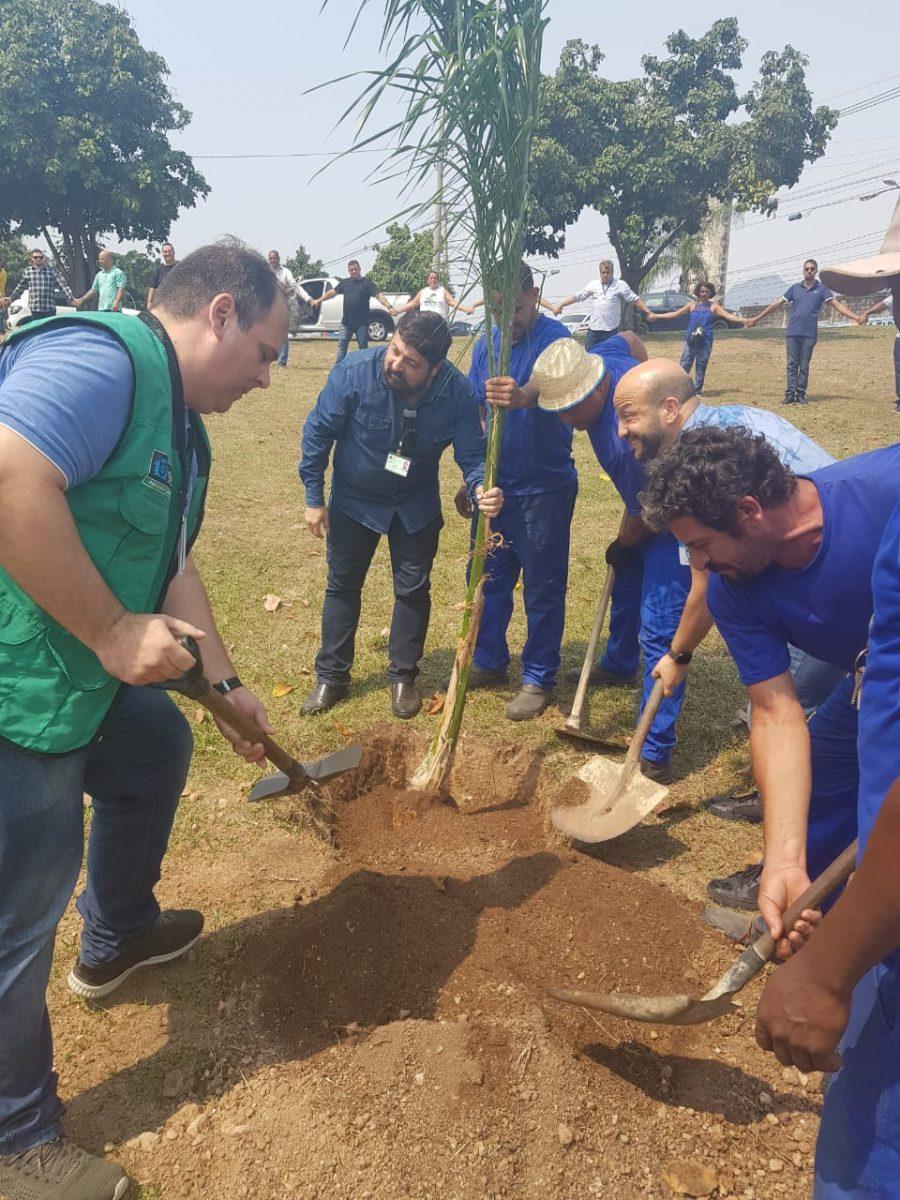 Plantio da primeira muda do projeto Via Verde, na Zona Norte. Foto: Divulgação