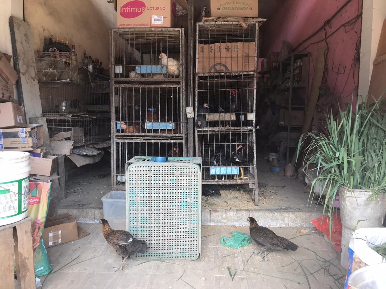 Loja fiscalizada em Guaratiba tinha animais com sinais de maus-tratos