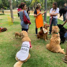 A Praça Nossa Senhora da Paz, em Ipanema, é ponto de encontro de animais de estimação e será local da microchipagem de domingo. Foto: divulgação / Subvisa