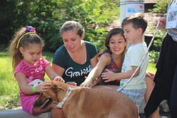 Subem recebe voluntários que queiram dar amor aos animais da Fazenda Modelo. Foto: divulgação / Subem