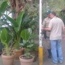 Xaxins ameaçados de extinção eram vendidos em quiosque em Ipanema. Foto: divulgação GM