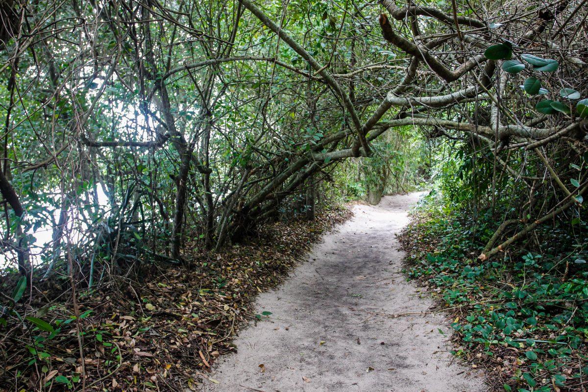 Para quem gosta de trilha, o Parque Municipal Chico Mendes é também ótima opção. Foto: Marcelo Piu / Prefeitura do Rio