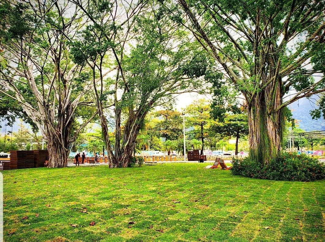 O novo gramado do Parque das Figueiras