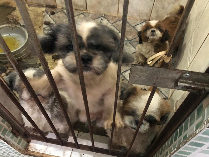 Cães confinados em espaços reduzidos e com sujeita: sinais de maus tratos e abandono em canil interditado pela Vigilância Sanitária. Foto: divulgação