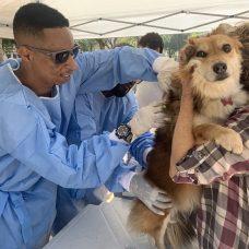 O processo de chipagem é rápido e indolor para o animalzinho. Foto: Nelson Duarte \ Vigilância Sanitária